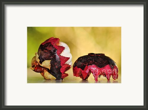 Tropical Mangosteen Framed Print By Kaye Menner