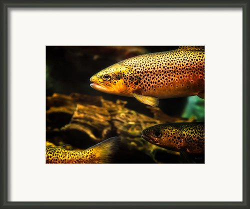 Trout Swiming In A River Framed Print By Bob Orsillo