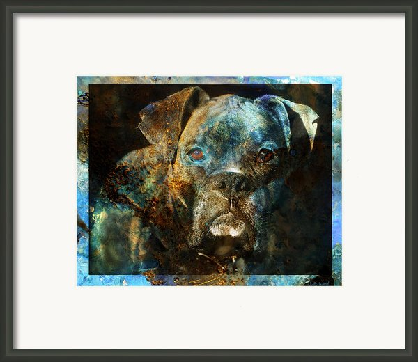 True Colours Framed Print By Judy Wood