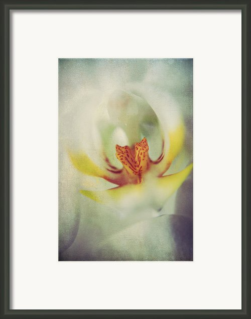 True Framed Print By Laurie Search