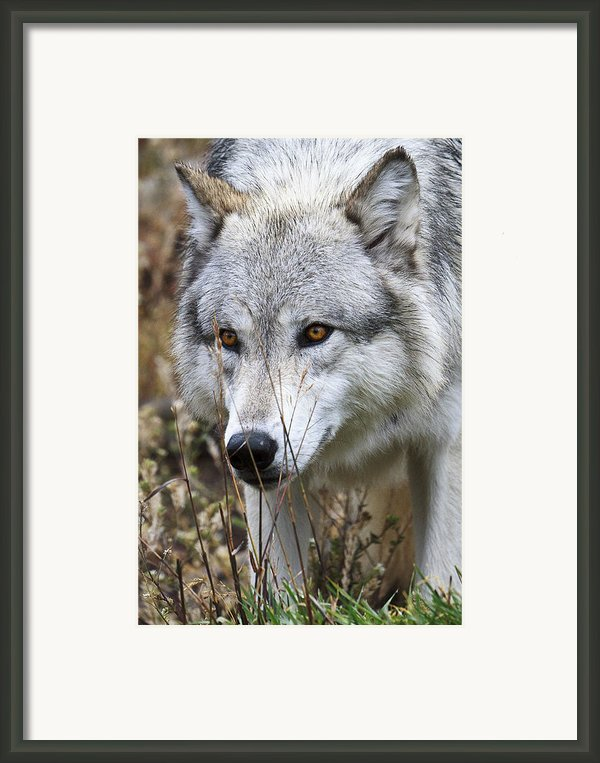 Trying To Hide D9884 Framed Print By Wes And Dotty Weber