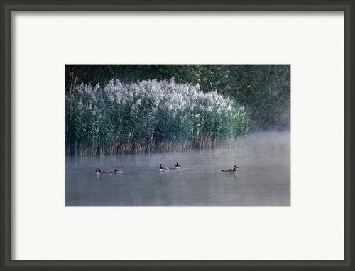 Tucked Away Framed Print By Skip Willits