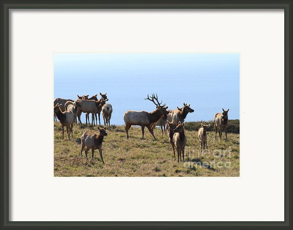 Tules Elks Of Tomales Bay California - 7d21236 Framed Print By Wingsdomain Art And Photography