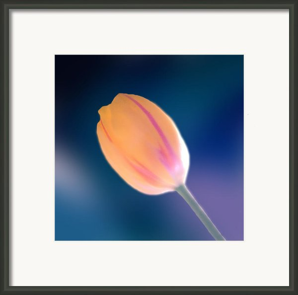 Tulip Framed Print By Marcin And Dawid Witukiewicz