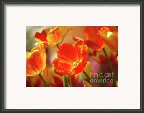 Tulips Framed Print By Kathleen Struckle
