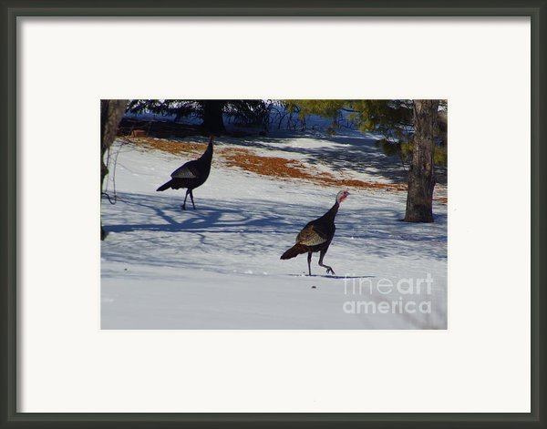 Turkey Walk Framed Print By Eric Menk