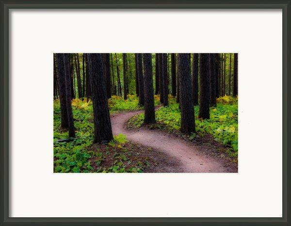 Turning Framed Print By Mary Amerman
