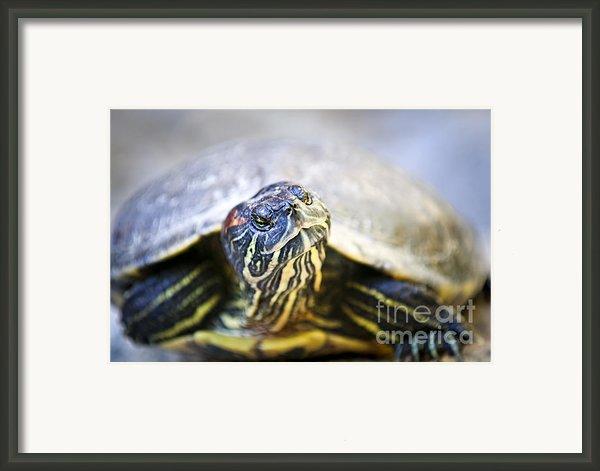 Turtle Framed Print By Elena Elisseeva