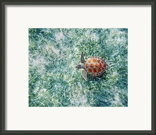Turtle Underwater Scene Framed Print By M Swiet Productions