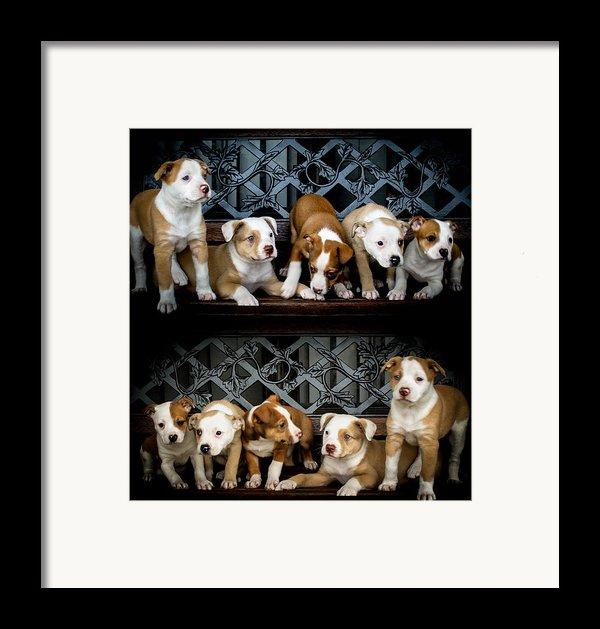 Twice The Love Framed Print By Mechala  Matthews