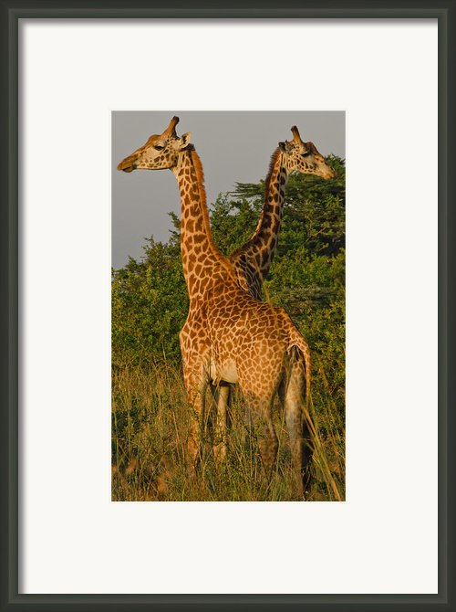 Two Heads Are Better Than One Framed Print By Aaron S Bedell