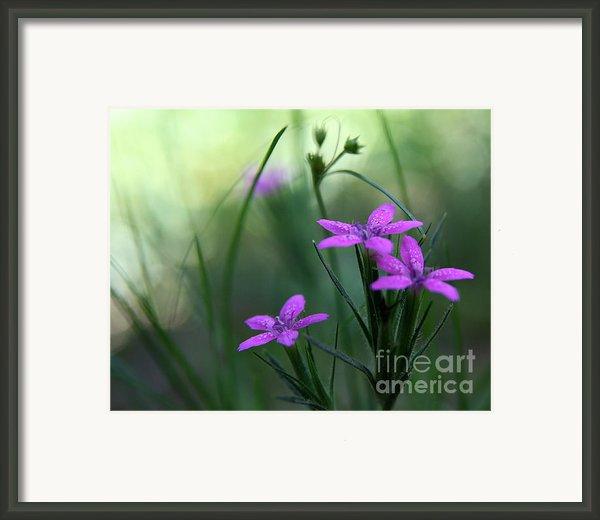 Ultra Violet Framed Print By Neal  Eslinger