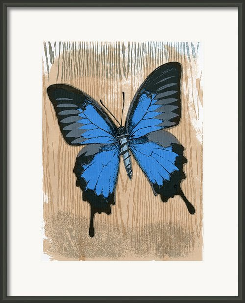 Ulysses Papilio With Screw Framed Print By Clare Winslow