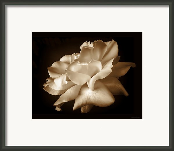 Umber Rose Floral Petals Framed Print By Jennie Marie Schell