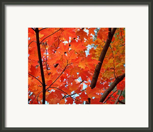 Under The Orange Maple Tree Framed Print By Rona Black