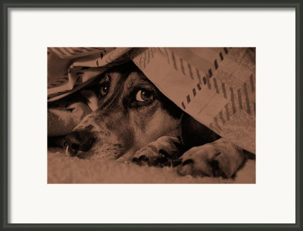 Undercover Hound Framed Print By Paul Wash