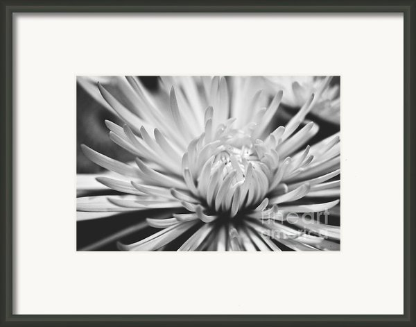 Unfolding Framed Print By Artist And Photographer Laura Wrede