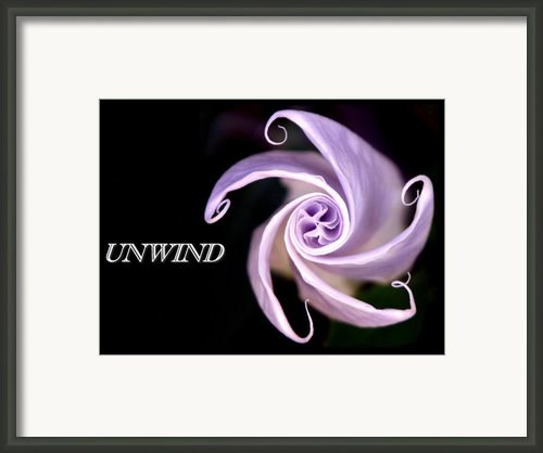 Unwind Wild Sacred Datura Bloom Framed Print By Sindi June Short
