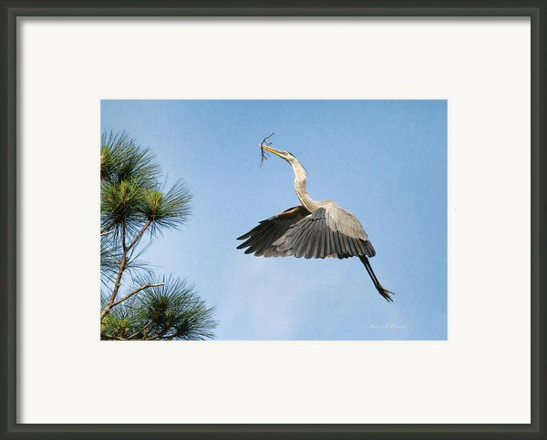 Up To The Nest Framed Print By Deborah Benoit