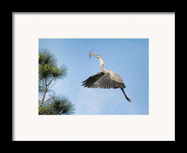 Up To The Nest Framed Print By Deborah Benoit