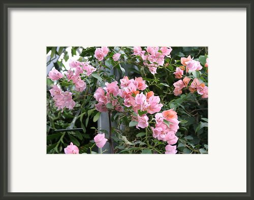 Us Botanic Garden - 121214 Framed Print By Dc Photographer