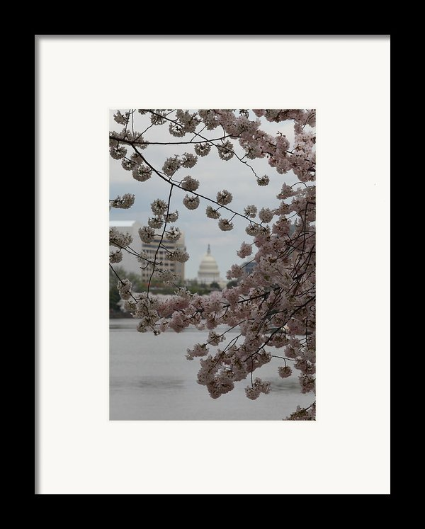 Us Capitol - Cherry Blossoms - Washington Dc - 01133 Framed Print By Dc Photographer