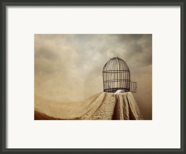 Vanishing Act Framed Print By Amy Weiss