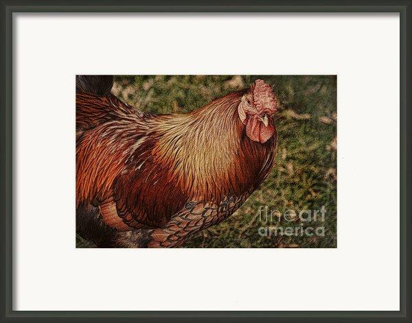 Vermont Rooster Framed Print By Deborah Benoit