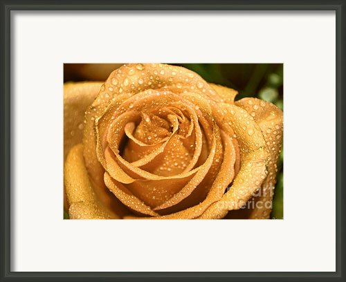 Very Wet Rose Framed Print By Debbie Portwood