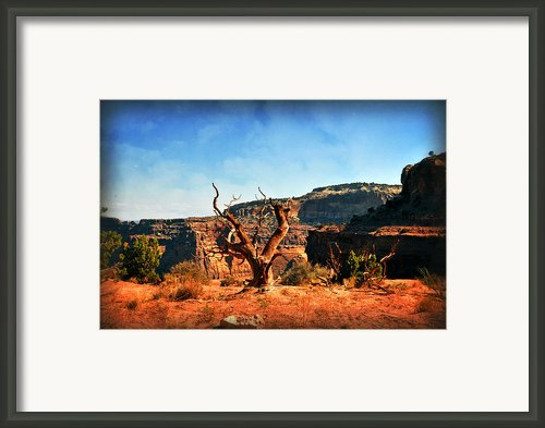 View Of The Canyon Framed Print By Marty Koch