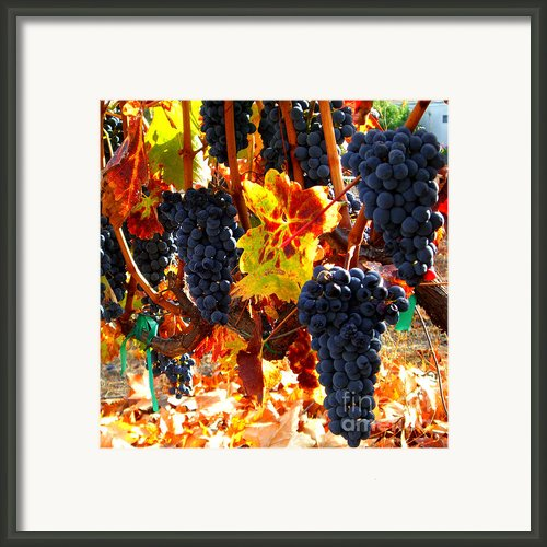 Vineyard 8 Framed Print By Xueling Zou