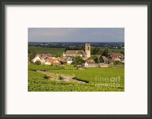 Vineyard And Village Of Pommard. Cote D