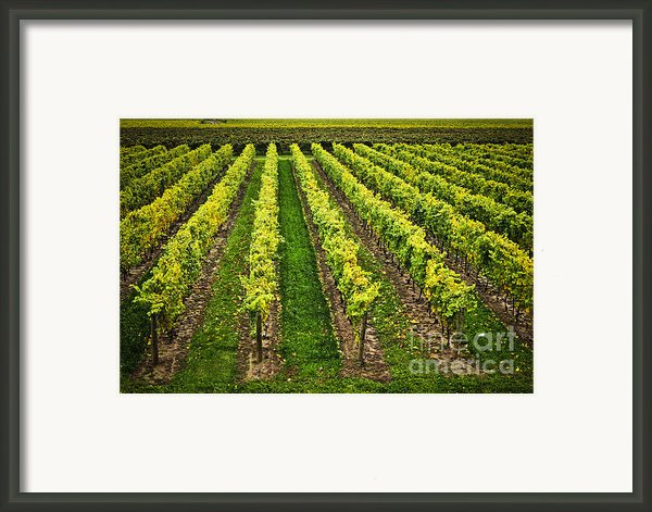 Vineyard Framed Print By Elena Elisseeva