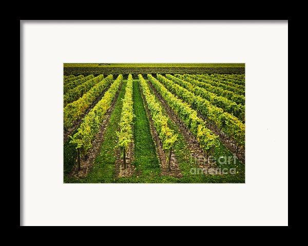 Vineyard Framed Print By Elena Elisseeva