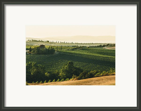 Vineyard From Above Framed Print By Clint Brewer