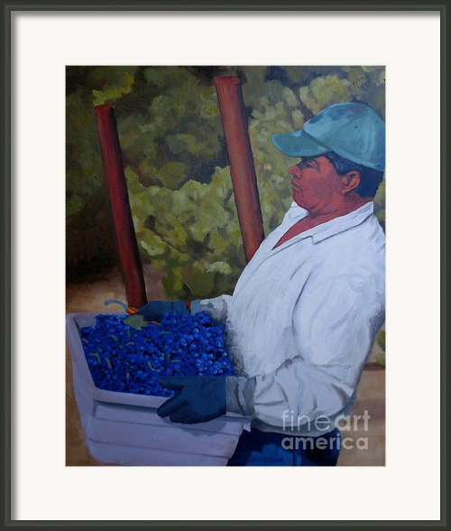 Vineyard Harvest Iii Framed Print By Donna Schaffer
