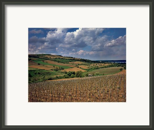 Vineyard In Frushka Gora. Serbia Framed Print By Juan Carlos Ferro Duque