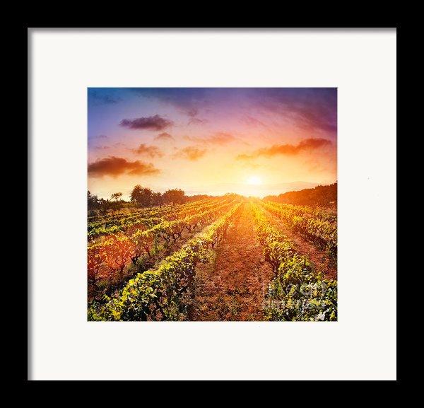 Vineyard Framed Print By Mythja  Photography