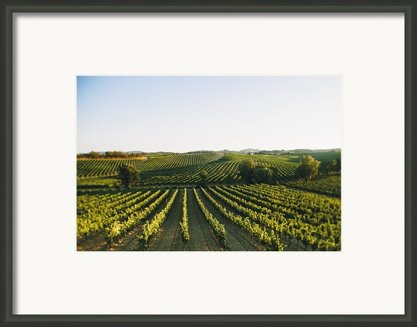 Vineyard Patchwork Framed Print By Clint Brewer
