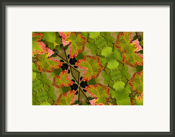 Vineyard Quilt Framed Print By Jean Noren
