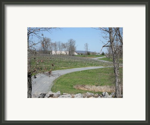 Vineyards In Va - 12122 Framed Print By Dc Photographer