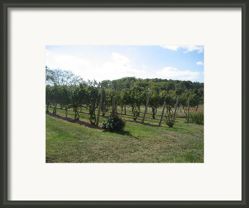 Vineyards In Va - 121251 Framed Print By Dc Photographer
