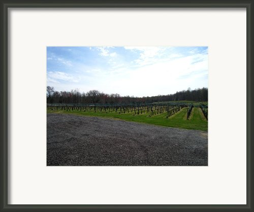 Vineyards In Va - 121267 Framed Print By Dc Photographer
