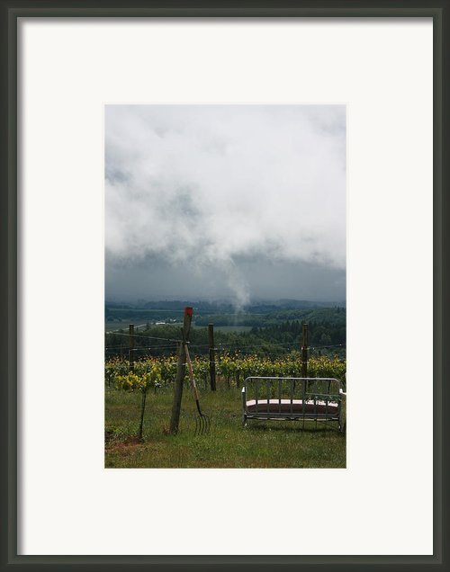Vineyards Framed Print By Michelle Densmore