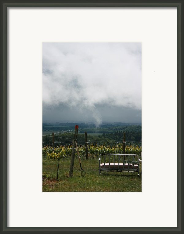 Vineyards Framed Print By Michelle Densmore