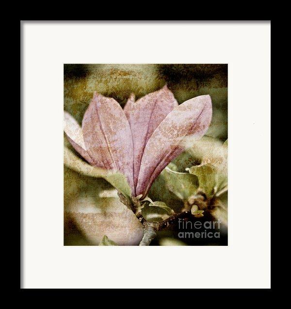 Vintage Magnolia Framed Print By Frank Tschakert