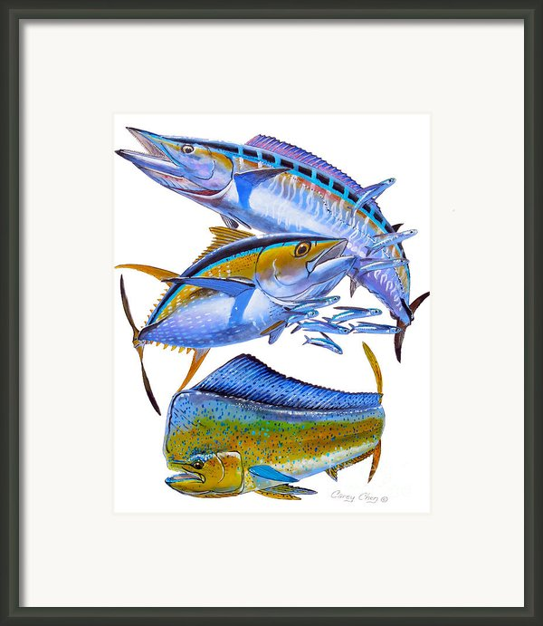 Wahoo Tuna Dolphin Framed Print By Carey Chen