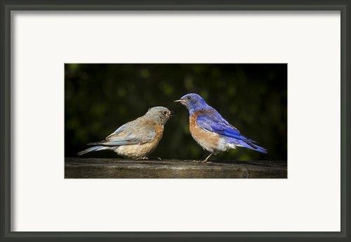Wait You Ate My Leg Framed Print By Jean Noren