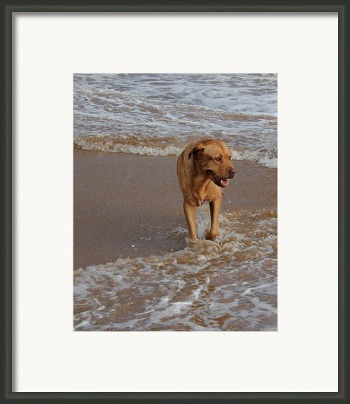 Waiting For Dad Framed Print By Bonita Hensley