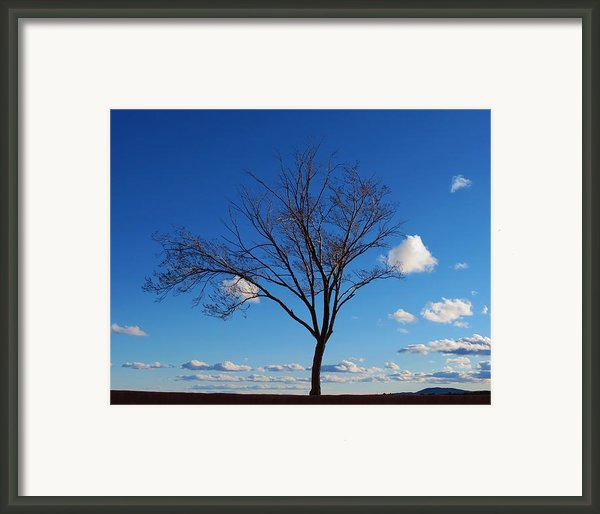 Waiting For Spring Framed Print By Feva  Fotos